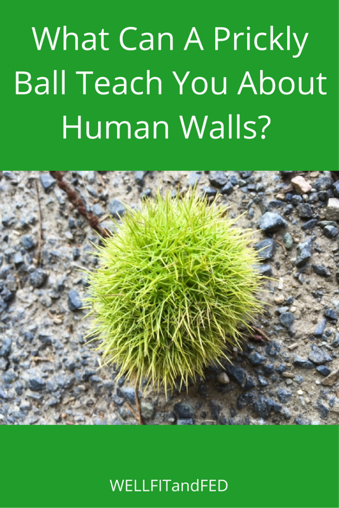 what-can-a-prickly-ball-teach-you-about-human-walls